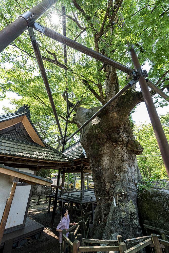 北杜市 根古屋神社の大ケヤキ