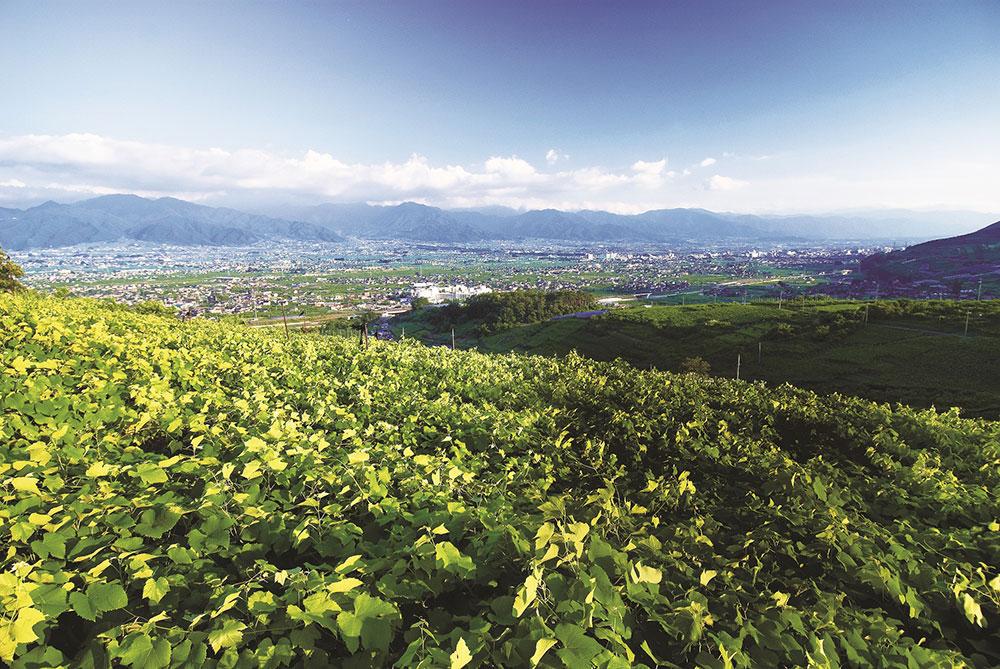 山梨市の果樹生産(ブドウ畑越し風景)